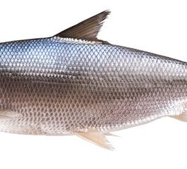 Fisher Farms Whole Bangus 600-800 g